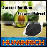 FAQ 29--How To Use Seaweed Fertilizer To Improve The Quality Of Avocado?