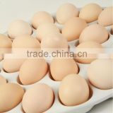 Wholesale Ceramic Egg Tray