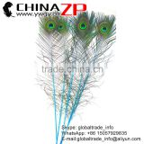 CHINAZP Factory Wholesale Crafts Decorative Full Eye Dyed Blue Peacock Feathers for Decoration
