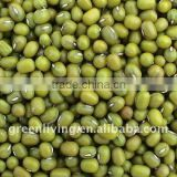 sell chinese dried green mung bean(high quality 3.2-3.6mm)