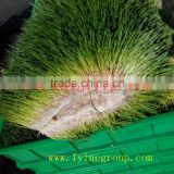 hydroponic fresh wheatgrass growing system cabbage seeds sprouting mach/Green Barley Fodder Machine/green fodder making machine