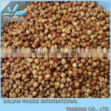 New Crop Sweet sorghum seed 2013