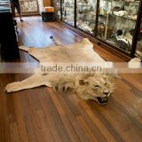 INquiry about Taxidermy synthetic faux lion skin rug