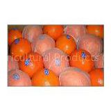 Citrus Sinensis Healthy Red Fresh Navel Orange Hybrid , Ruby Blood Orange