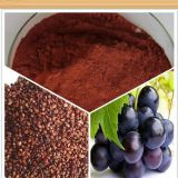 High quality Grape seed extract powder Grape seed p.e. for Antioxidant