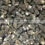 New Crop High Quality in season Cultivating morel mushrooms morchella