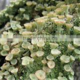 High quality Xanthoparmelia Scabrosa Extract Wholesale, Natural Lichen Extract( Usnic Acid/Usninic Acid)