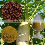 Top Quality Chinese Radish Seed /Chinese Green Luobo