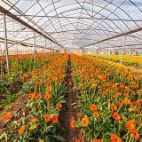 China supplier low cost agriculture polytunnel mushroom greenhouse