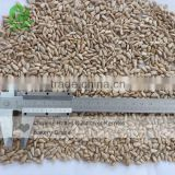 organic sunflower seed kernels 2015 crop bakery and confectionery grade Inner Mogolia origin