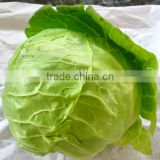 good quality and cheap price cabbage