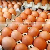 Fresh Farm Brown Table Chicken Eggs