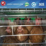 used poultry equipment for sale