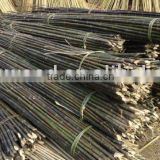 Natural black bamboo poles/Tokyo bamboo/bamboo cane/ moso bamboo best price & wholesale