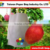 TPBI Taiwan high quality agriculture and food paper bag factory banana cover paper bag banana growing paper bag