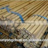 bamboo pole for garden decoration eco-friendly factory direct supplying hot sale cheap large bamboo Tonkin Tsinglee bamboo pole