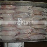 frozen squid(loligo squid,frozen fish)