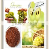 grape seed extract bulk purchase