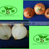 Hot Sale Big Yellow Onion Packing In Mesh Bag Sale In Market Price
