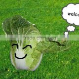 chinese cabbage(export standard)