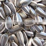 Chinese sunflower seeds 5009