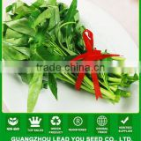 NWS03 Mafan hot sale leaf vegetable seeds, water spinach seeds