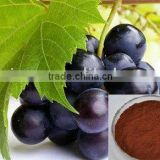 Herbal extract Grape Skin extract (30% Proanthocyanidins,30%Polyphenols)