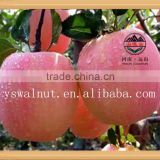 Bulk Fresh Fuji Apple Fruit for Export