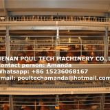 Brazil Poultry Farm Equipment - H Frame Full Automatic Layer Chicken Cage Equipment & Battery Chicken Cage for Farmer in Shed