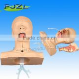 Medical Suction Training Model,medical training manikin