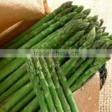 Supplier Top Quality Asparagus Extract 5%~50%