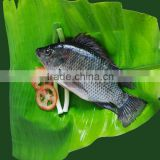 Block Shape and IQF Freezing Process frozen tilapia fish