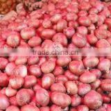 Export Onion Specification