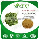 Manufacturer sales Green Tea Extract 40%-98%/ Green Tea Caffeine Extract Powder / 10%~20% Green Tea Natural Caffeine