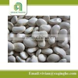 2014 crop kidney beans, white kidney beans, high protein dried beans