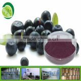 China wholesale Top Quality Acai Berry Juice Powder - 100% water soluble
