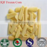 IQF Freezing Process and Frozen Style canned sweet kernel baby corn