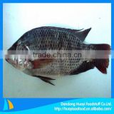 frozen tilapia for sale