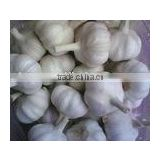 fresh garlic:normal white garlic pure white garlic size:4.5-5cm;5cm-6.5cm;6.5cm and up fresh season:from June to September
