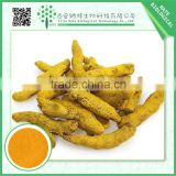 wholesale turmeric root extract powder 95% curcumin
