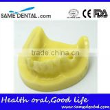 Mandibular Implant Dental Training Model (no gum) Dental Eduction Assitant No. DEA-22