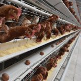 Selling battery chicken layer cages hen cages for poultry layer farming