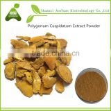 polygonum cuspidatum P.E. ,polygonum cuspidatum Seeds , Giant Knotweed Root Powder Resveratrol
