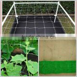 We are in the production of 8gsm green bean net to Europe