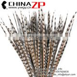 No.1 Manufactor ZPDECOR Best Selling Cheap Large Natural 70-80cm Length Reeves Venery Pheasant Tail Feathers