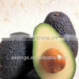 Bright Yellow Avocado Oil Essential Oil Bulk
