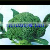 Newly F1 Hybrid Broccoli seeds /Cauliflower seeds
