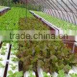 PVC Hydroponic Channels for lettuce 118mmx50mm