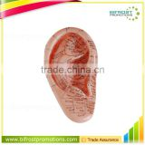12cm Anatomical Human Body Model Ear Acupuncture