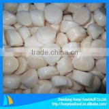frozen scallop for sale